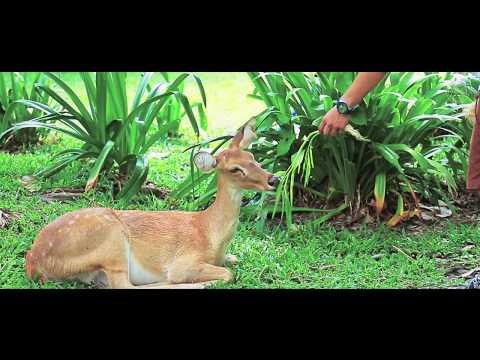 Sai Kaew Beach Sattahip & Khao Kheow Open Zoo Animal Sanctuary Tour | The Asia