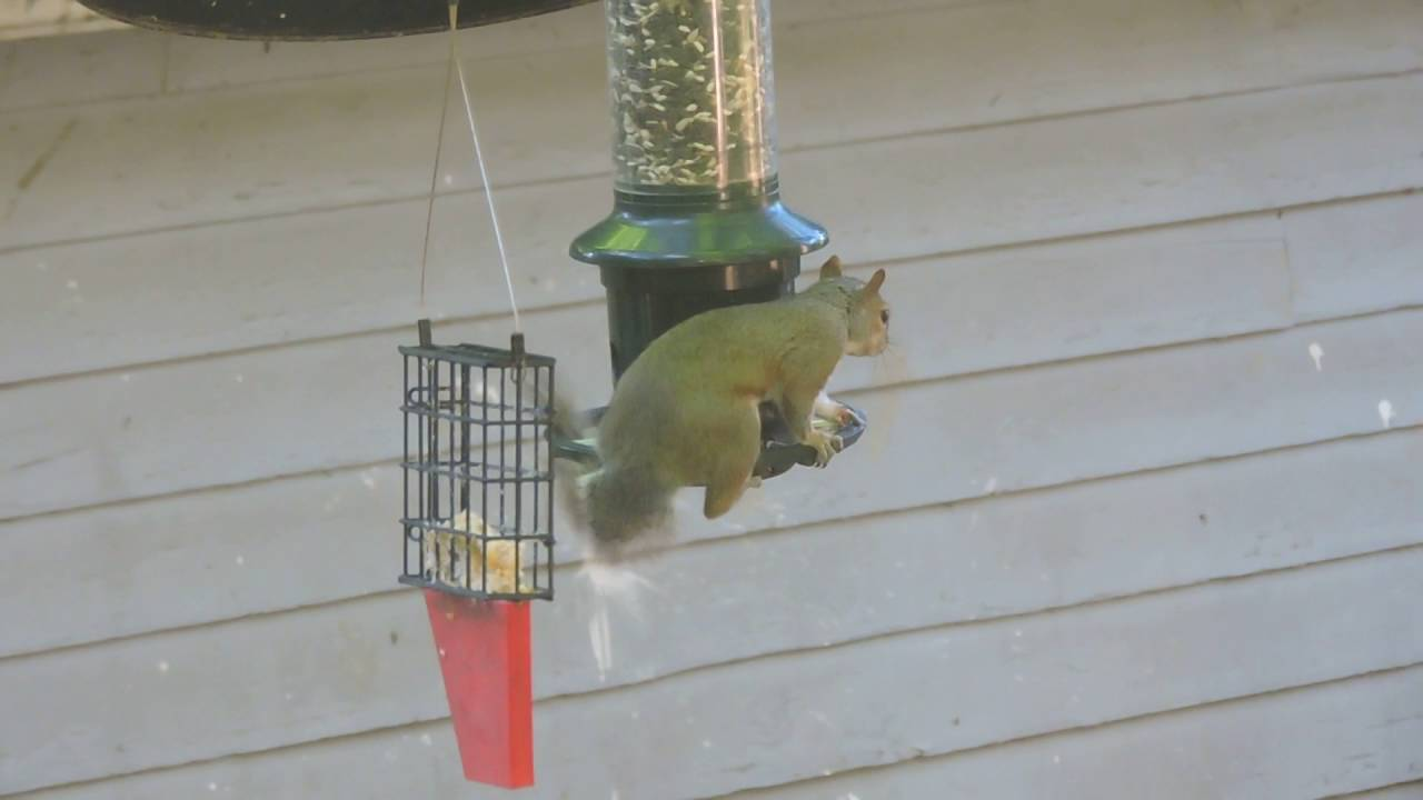 squirrel bird image wondrous feeder buster feeders full brome outstanding proof for peanut