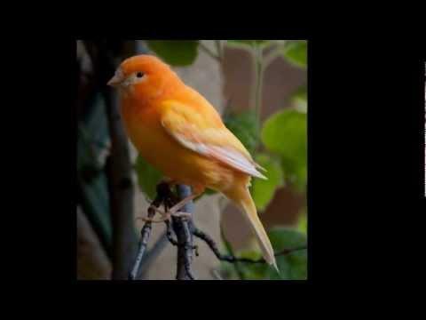 Ralf Bendix  Singe, Kleiner Canarino  Sing, Little Canary 1968