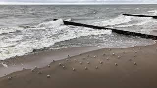 Чайки смотрят в одну сторону