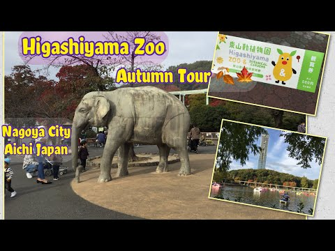Higashiyama Zoo Autumn Tour 2020| Nagoya City Aichi Ken Japan