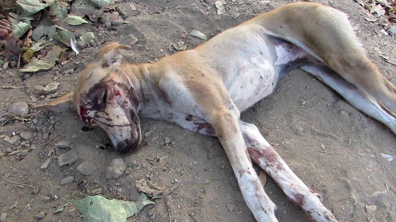 Image result for dead dog