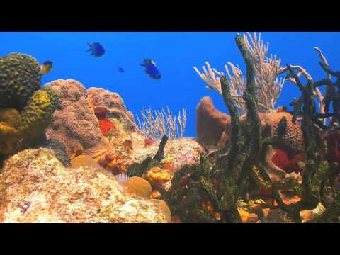 Seabed Coral Reef