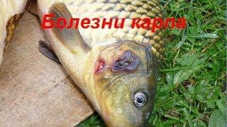 видео Болезни прудовых рыб