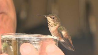 Rescue German Shepherd Adopts Hurt Hummingbird, Helps Nurse It Back to Health