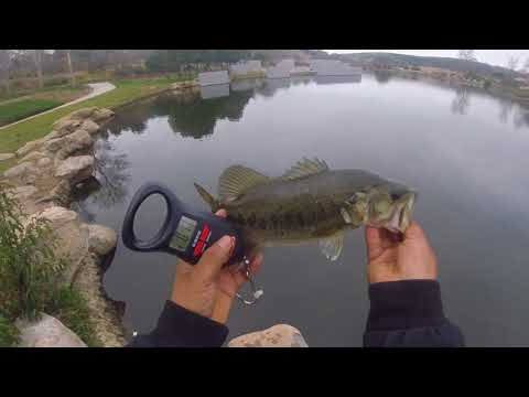 Bass Fishing Secret Spot In Sandiego