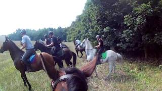 Stajnia Terenowo-Rajdowa Nawojowa Góra , pedza konie po ......