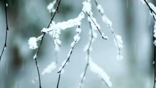 ブナの森から 西尾まり 動画 14