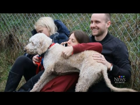 Dog found in Ontario after it was placed on wrong WestJet flight