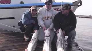 San francisco fishing charters for San francisco bay fishing charters