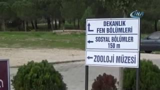Uludağ Üniversitesi'nde yaban domuzu paniği