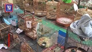 PERHILITAN selamatkan 42 burung
