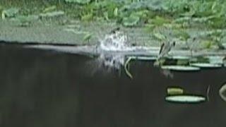 大遠投で雷魚を狙う 2014年8月27日一発目