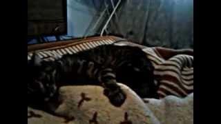танцующая попа кота(кот танцор., 2013-02-25T17:17:42.000Z)
