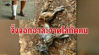 ผวาทั้งหมู่บ้าน หมาจิ้งจอกดุร้ายกัดชาวบ้านเมืองจันท์ 3 รายรวด ก่อนจะถูกคนงานกัมพูชาตีจนตาย