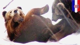 التقاط فيديو لدبين بريين يمارسان الجنس الفموي