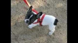 Dog Leash Training 3.
