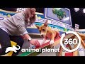 Training with Puppies Malibu and Scott | Puppy Bowl XV: Training Camp (360 Video)
