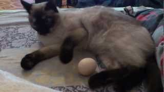 кошка и яйцо)