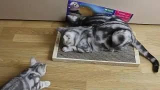 Как отучить кошку портить диван? Вам в помощь Когтедралка домашняя