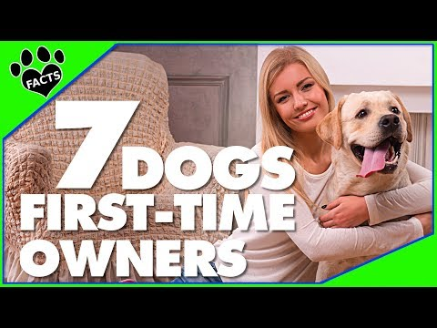 7 Best Dog Breeds for First-Time Dog Owners Dogs 101