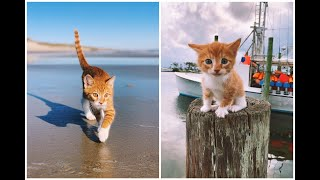 Meet Marlin! The swimming, oceanloving, boat riding CAT that thinks he's a DOG in the Outer Banks.