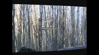 Building A Tree Stand / Platform For Hunting  .wmv