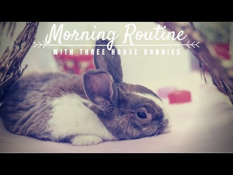 My Morning Care Routine With 3 House Rabbits