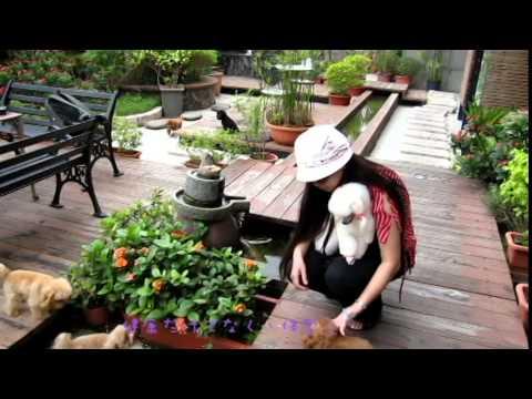 Tazza Da Te Orsacchiotto Barboncino Prendere Il Sole In Giardino 1