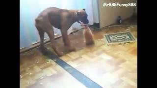 Маленький котенок нагло отбирает еду у собаки