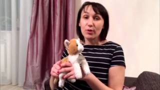 Alina's cat story