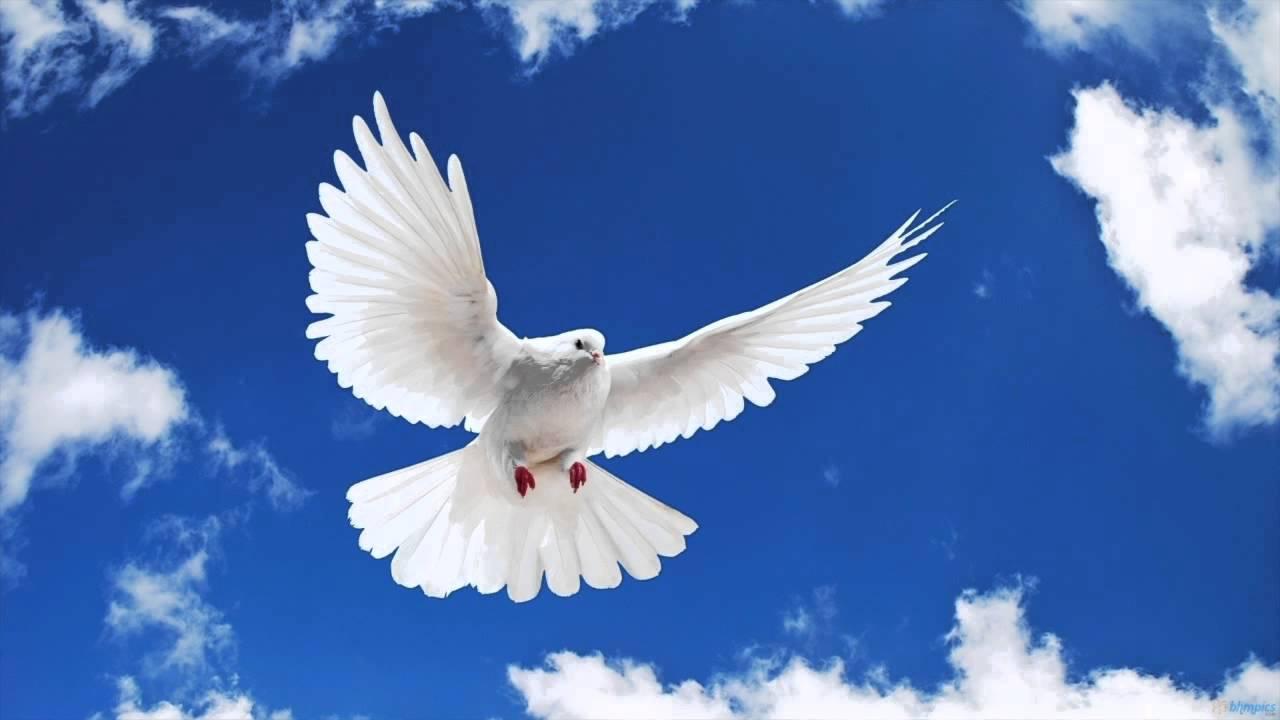 גד אלבז ציפור גן עדן Gad Elbaz - Heaven Bird