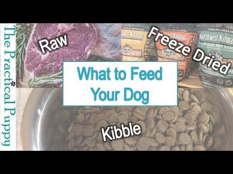 Best freeze dried raw dog food canada