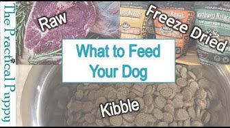 What to Feed Your Dog - Raw, Freeze Dried, or Kibble?
