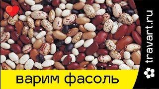 Как варить фасоль. Фасоль приготовление Просто полезно и вкусно ТРАВАРТ Животворец Андрей Протопопов