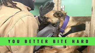 How to Make Your Dog Bite Hard | Grassroots K9