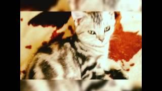 Кошка как в рекламе вискас Василиса