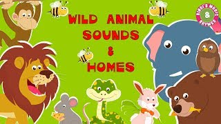 Wild Animal Sounds & Homes | Educational Rhymes | Nursery Rhymes for Children