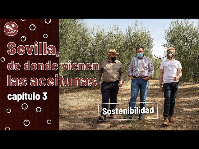 Sevilla, de donde vienen las aceitunas | Capítulo 3: Sostenibilidad