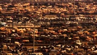 Мега ферма КРС(Решил показать как устроены МЕГА фермы по разведению крс в США. Небольшой отрывок из фильма ДОМ., 2015-04-20T10:24:43.000Z)