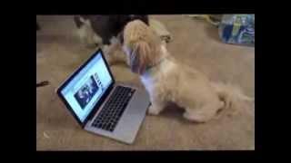 Поющие и говорящие собаки