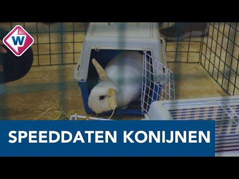 Speeddates voor konijnen in Het Knaaghof: 'Derk is klaar voor de date' – OMROEP WEST