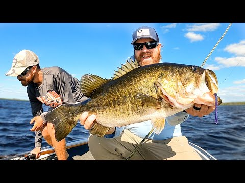 Shaky Head Worms For BIG Bass!! Post Spawn Bass Fishing Madness!