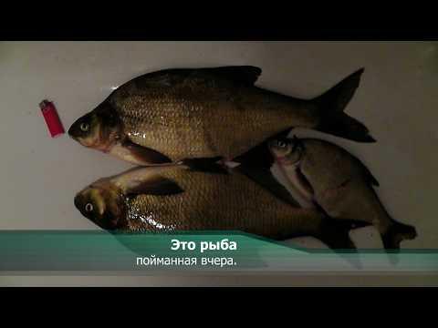 Видео Прогноз ловли рыбы