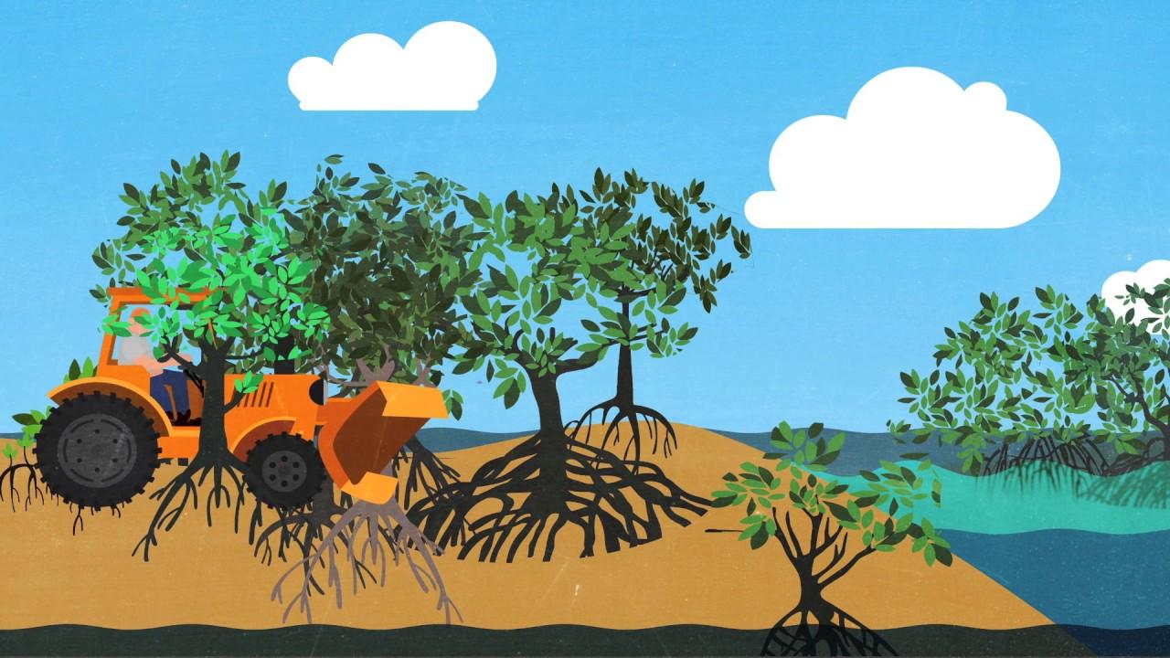 En el manglar - 3 2