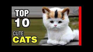 Top 10 Cutest Cat Breeds In The World | 10 Most Beautiful Cats |