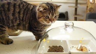 Смотреть бесплатно приколы про животных 2019 - Смешные животные МатроскинТВ