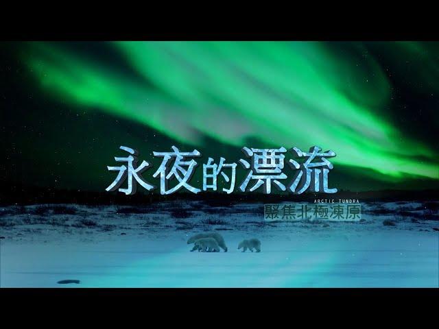 永夜的漂流 聚焦北極凍原 《聚焦全世界》Drifting Under Polar Night FOCUS on Arctic