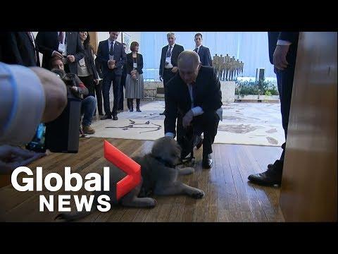 Vladimir Putin gifted puppy by Serbian President Aleksandar Vucic