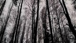 Мозырянин потерялся в лесу